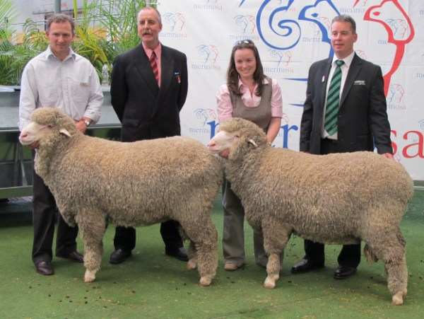 The two Glenlea Park rams sold at Adelaide 2010