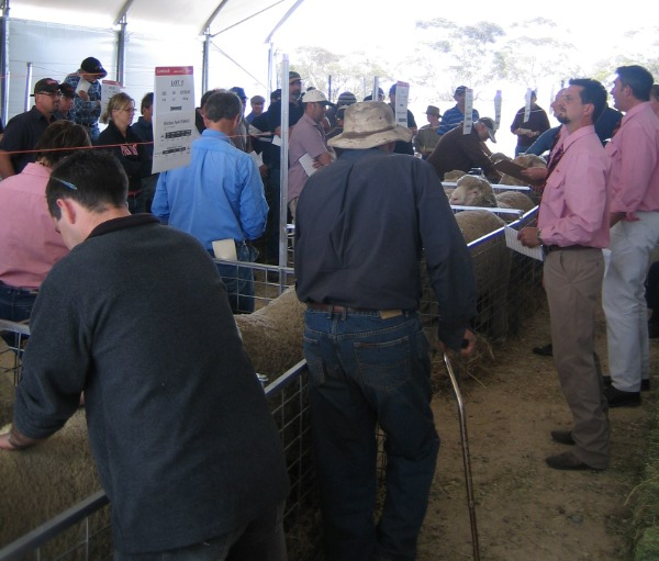 A good crowd was in attendance at the 2009 GP ram sale..